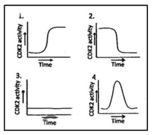 cyclin and cdk in cell cycle