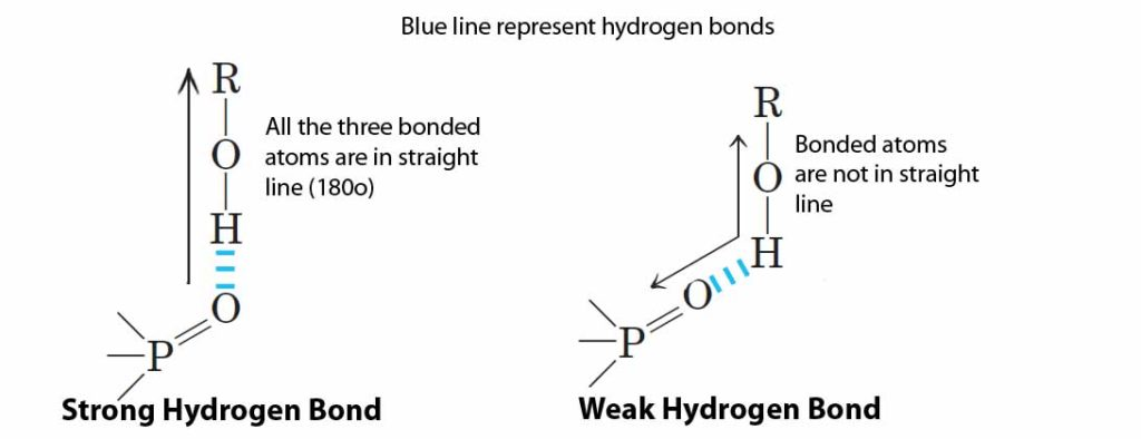strong and weak hydrogen bond
