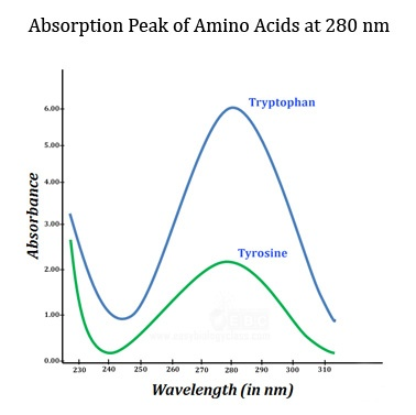 Absorption spectra of protein and amino acids