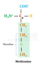 sulfur sulphur in methionine is as thioether