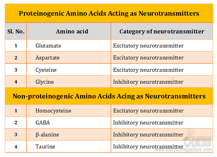 role of amino acid as neurotransmitters
