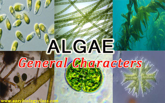 Important Characteristics of Algae