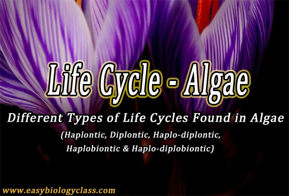 Life Cycle of Algae