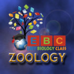 Zoology lecture notes and study materials