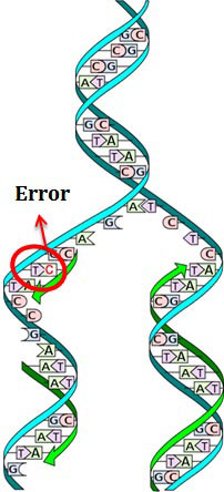Proof Reading of DNA Polymerase