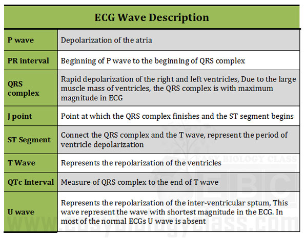 How to read ECG Electrocardiogram