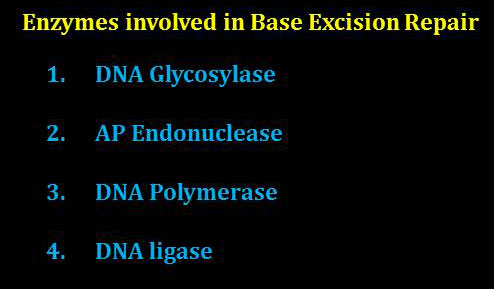 DNA Repair Enzymes