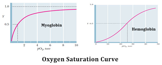 Haemoglobin oxygen saturation curve