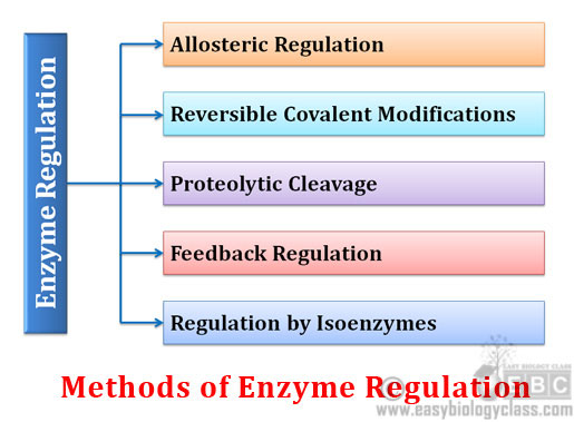 Mechanisms of enzyme regulation