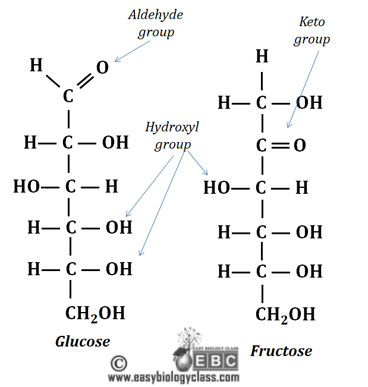 what are aldoses, what are ketoses