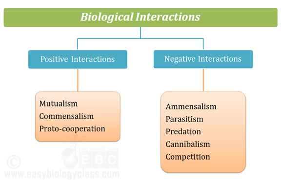 Different types of population interactions