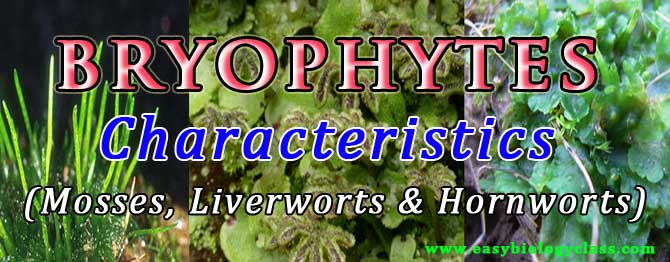 Characters of Bryophytes