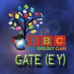 gate ey apply online