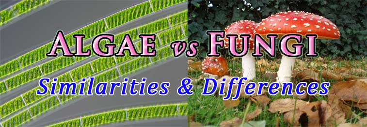 difference between fungi and algae