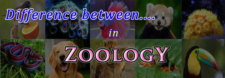 major difference between in zoology
