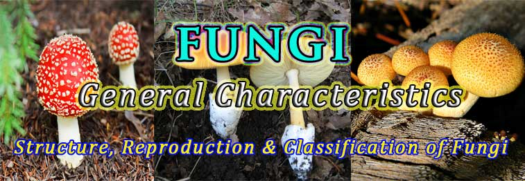 general characters of fungi ppt