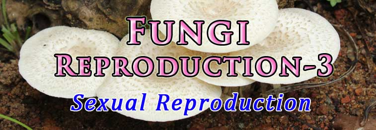 methods of sexual reproduction in fungi