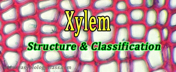 cell types in xylem