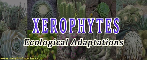 ecological adaptations of xerophytes ppt