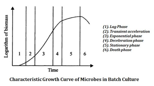 growth kinetics of batch culture