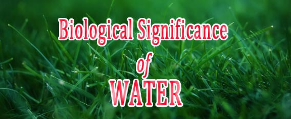 biological functions of water