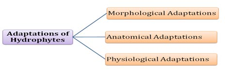 ecological adaptations Hydrophytes