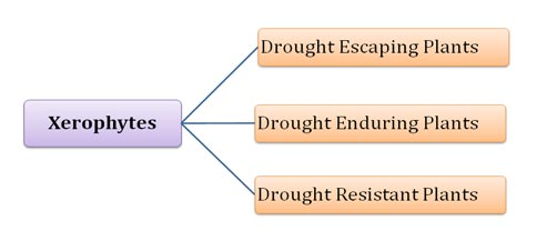 Drought Resistant and Escaping Plants