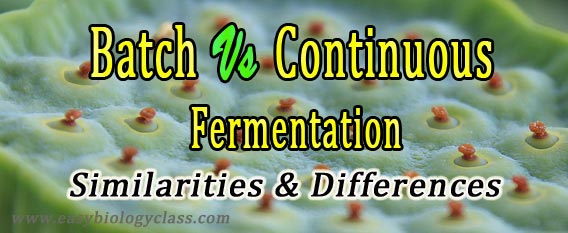 Difference continuous and batch fermentation