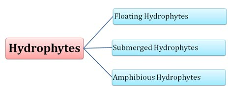 classes of hydrophytes