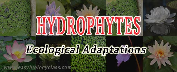 Water plants adaptations PPT