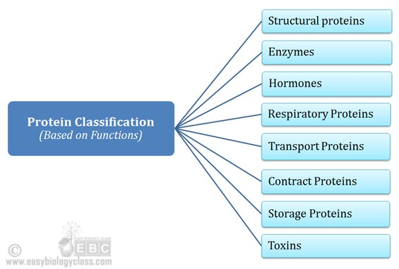 how proteins are classified
