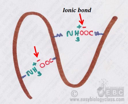 protein ionic bond diagram
