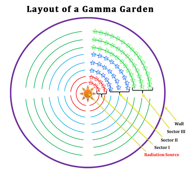 layout of a gamma garden