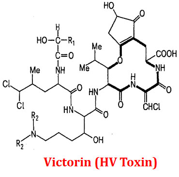 victorin is produced by