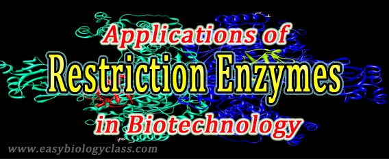 Restriction enzymes in Genetic Engineering