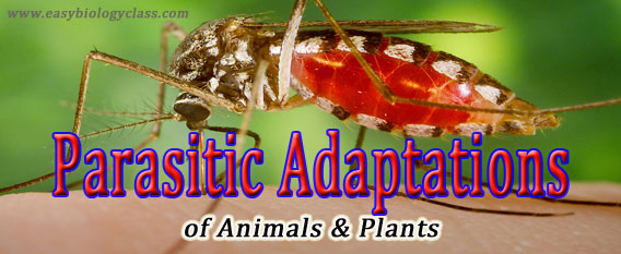 parasitic adaptations
