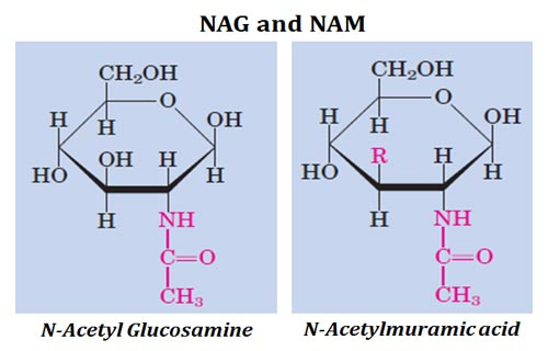 NAM and NAG Structure