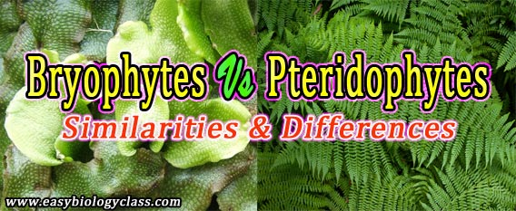 Difference between Pteridophytes and Bryophytes