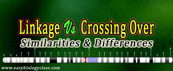 Linkage vs Crossing Over