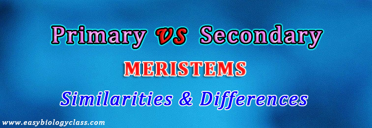 Primary vs Secondary Meristem in Plants