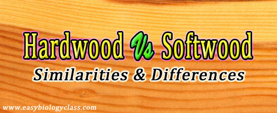 Difference between Porous and Nonporous Wood