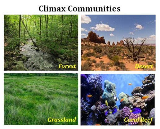 What is climax community