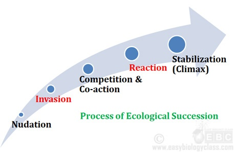 Five steps in succession
