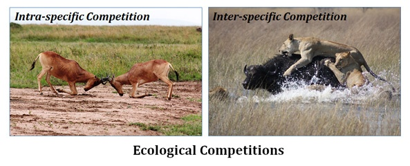 Ecological competitions