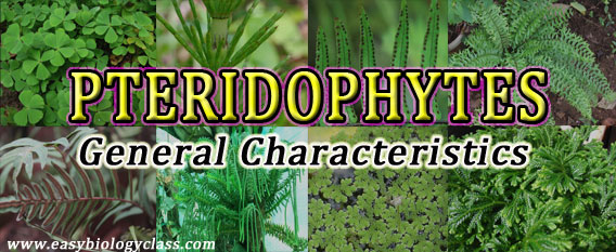 General Characters of Pteridophytes