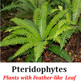 Pteridophyta General Characters