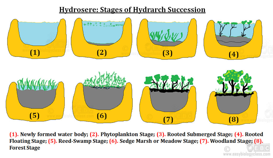 Hydrosere Definition Amp Seral Stages Ppt Easybiologyclass