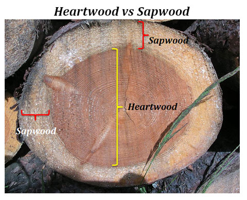 Heart wood and Sap wood