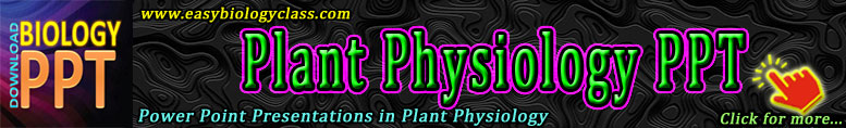 PPT Plant Physiology
