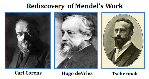 Scientists who rediscovered Mendels Work